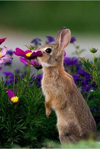 animals-and-flowers